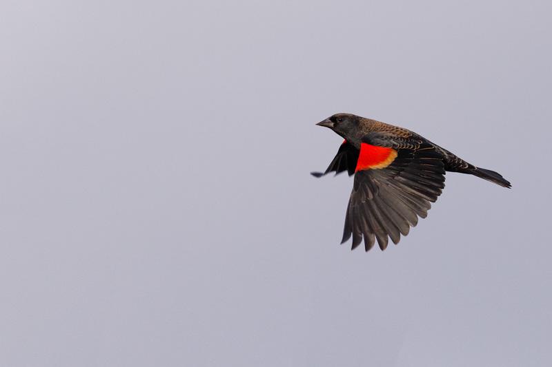 marlo[casabar@me[com~Advanced Adult~Birds~3.jpg