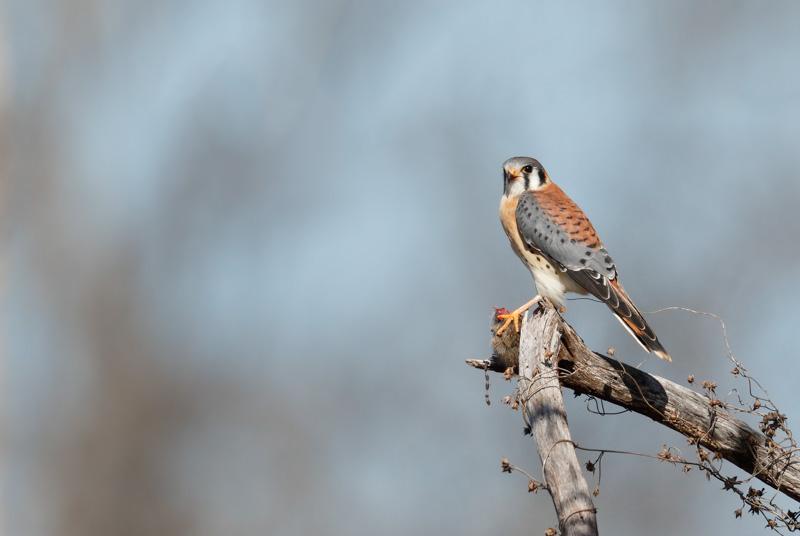 marlo[casabar@me[com~Advanced Adult~Birds~1.jpg