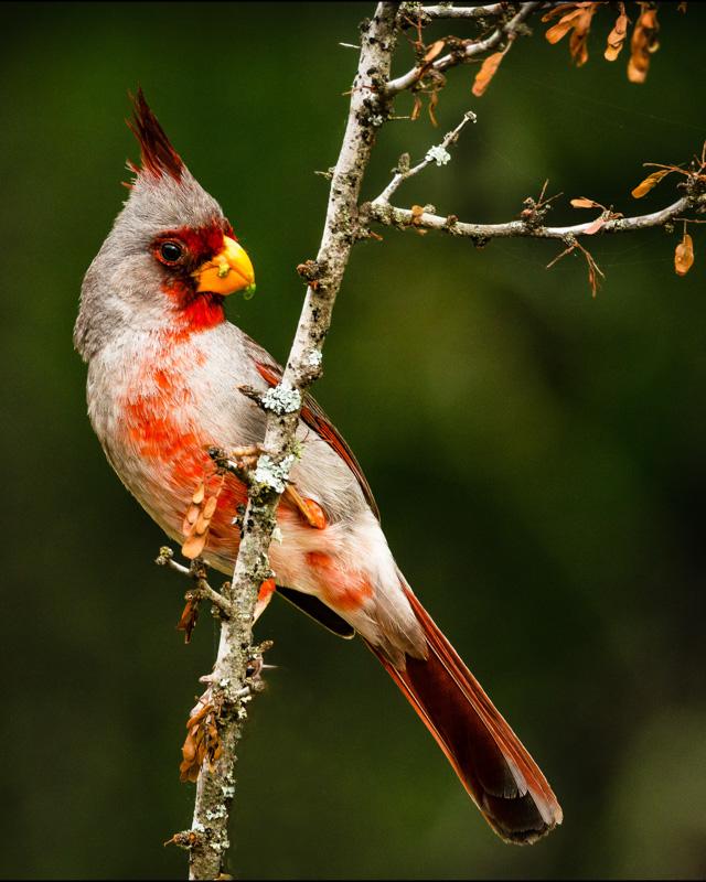 ron[photography@yahoo[com~Advanced Adult~Birds~1.jpg