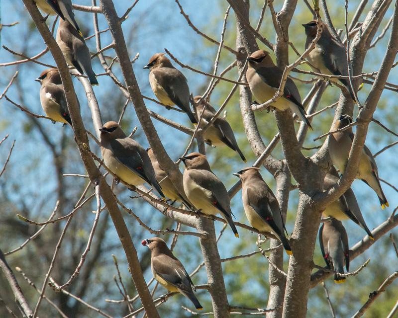 gretchencday@gmail[com~Advanced Adult~Birds~1.jpg