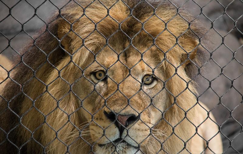 gretchencday@gmail[com~Advanced Adult~Animals - Captive~1.jpg