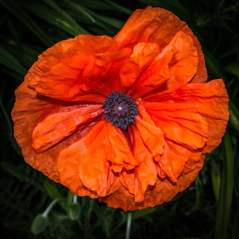 leehatfield@me[com~Advanced Adult~Floral~3.jpg