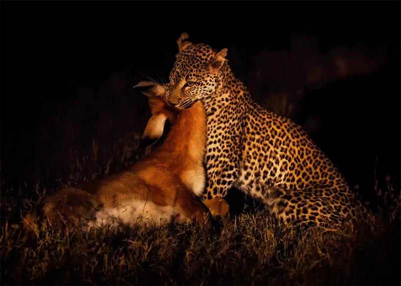 photogea@aol[com~Advanced Adult~Animals - Wild~1.jpg