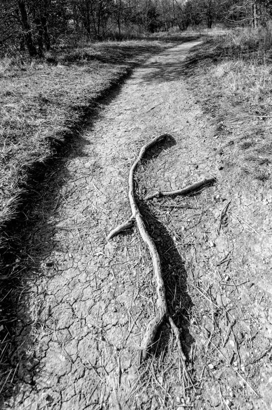 ©2017John Deal Trail Runner