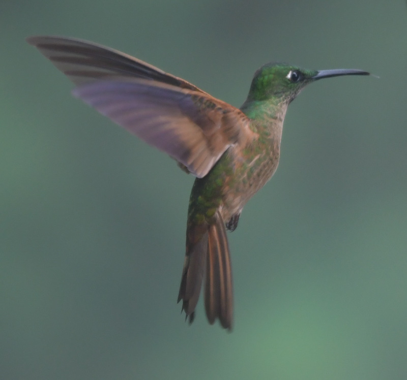 jacktphotography@gmail[com~Advanced Adult~Birds~6.jpg