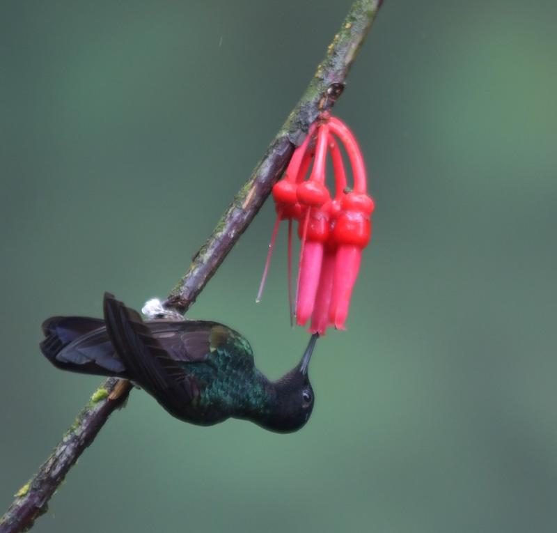 jacktphotography@gmail[com~Advanced Adult~Birds~5.jpg