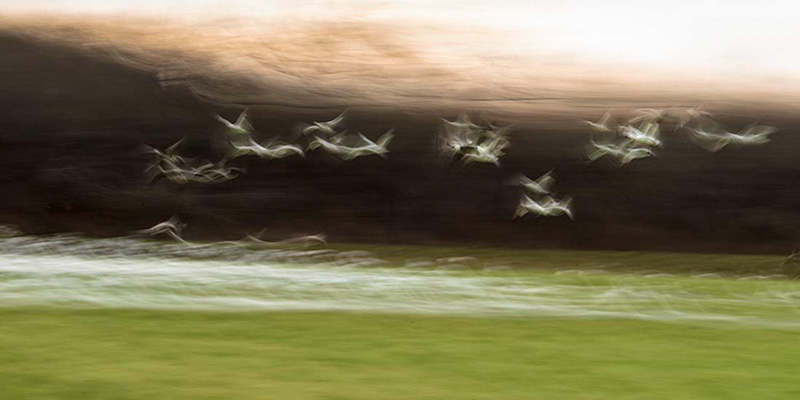 Ghost Geese