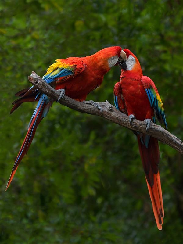jacktphotography@gmail[com~Advanced Adult~Birds~4.jpg