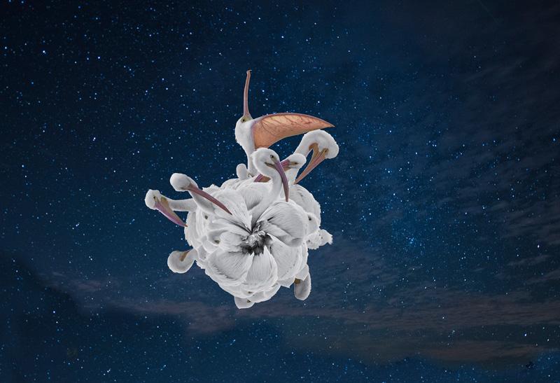 Pelican Planet