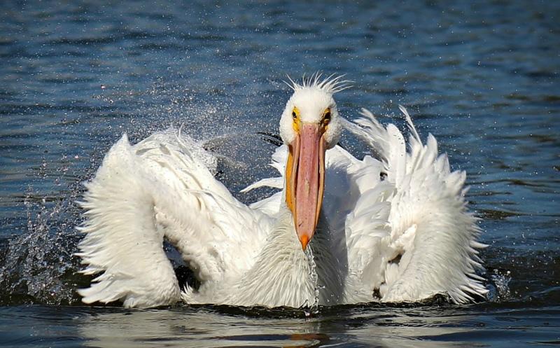 kelley905@hotmail[com]2~Advanced Adult~Birds~1.jpg