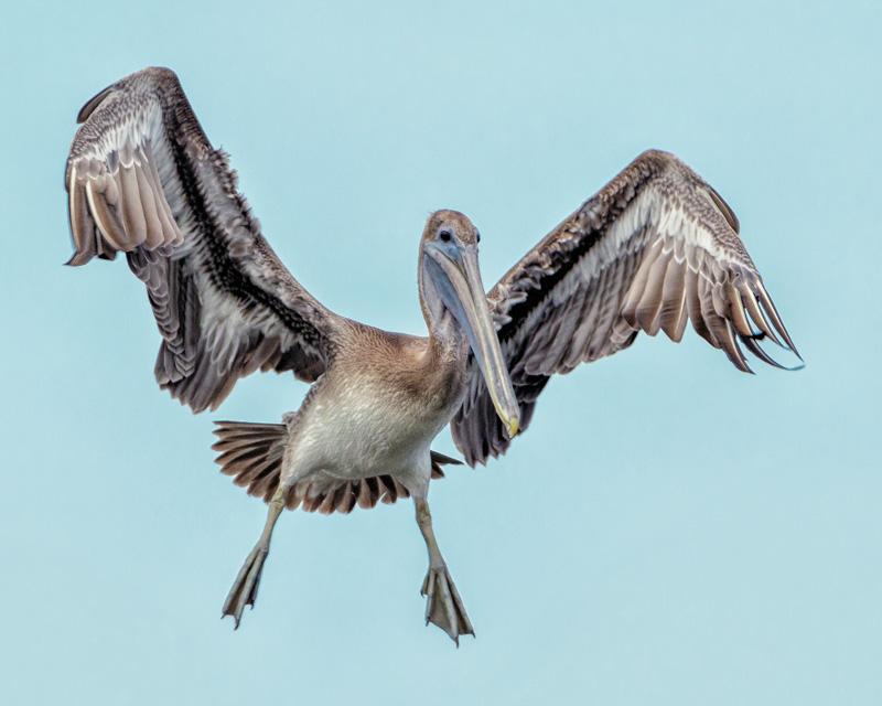 richard[higgins@naturesvision-photography[com~Advanced Adult~Birds~2.jpg