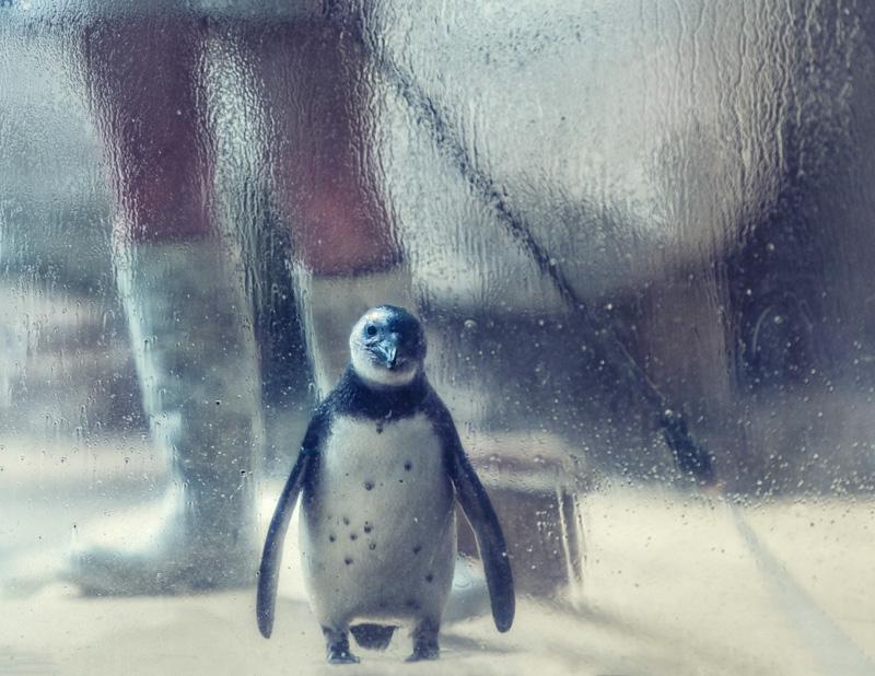 ron_henderson@richards[com~Advanced Adult~Animals - Captive~2.jpg