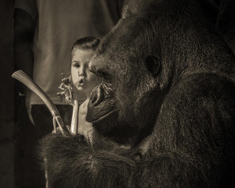 ron_henderson@richards[com~Advanced Adult~Animals - Captive~3.jpg