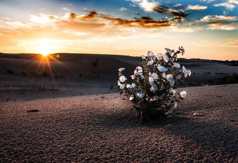 First Kiss for Desert Flower