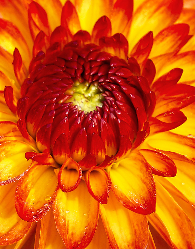Red Yellow Flower