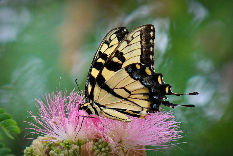 kelley905@hotmail[com]2~Advanced Adult~Insects, Butterflies, and Arachnids~1.jpg