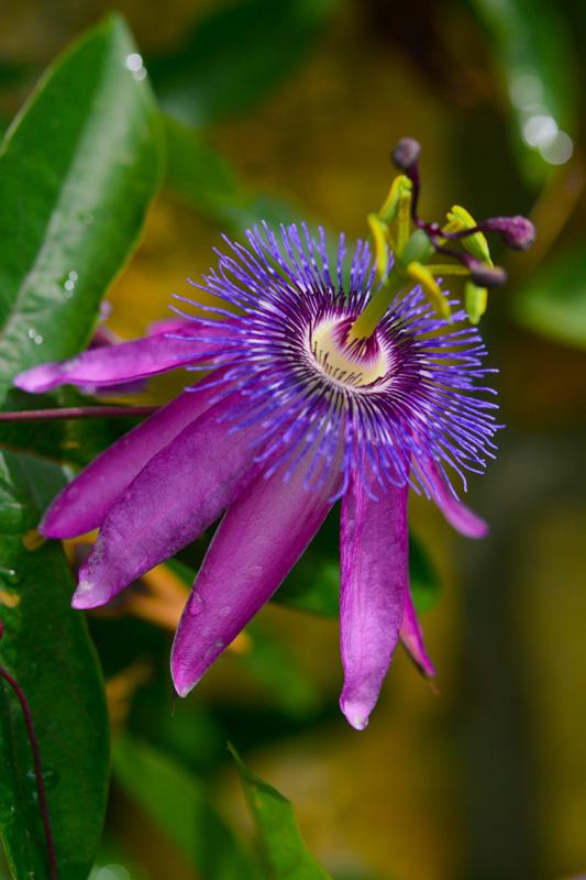 ©Suzonne Evans ~ Floral Color Explosion