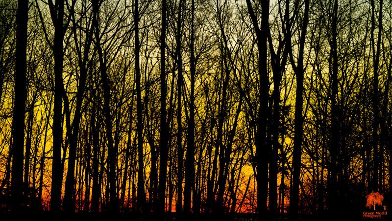 Camden Forest at Daybreak