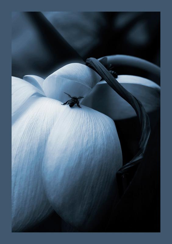 Bee Hind  Img 8179