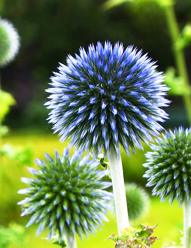Taplow Blue