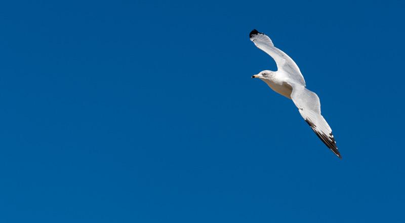 Sailing Bird