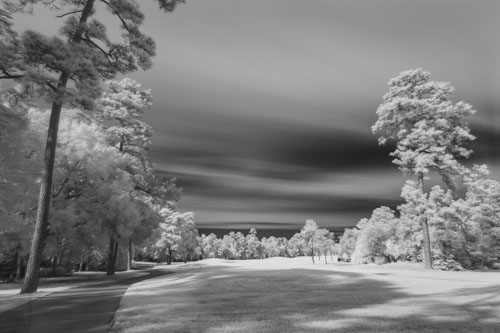 Infrared filter, golf course, green grass, conifer trees, long exposure.
