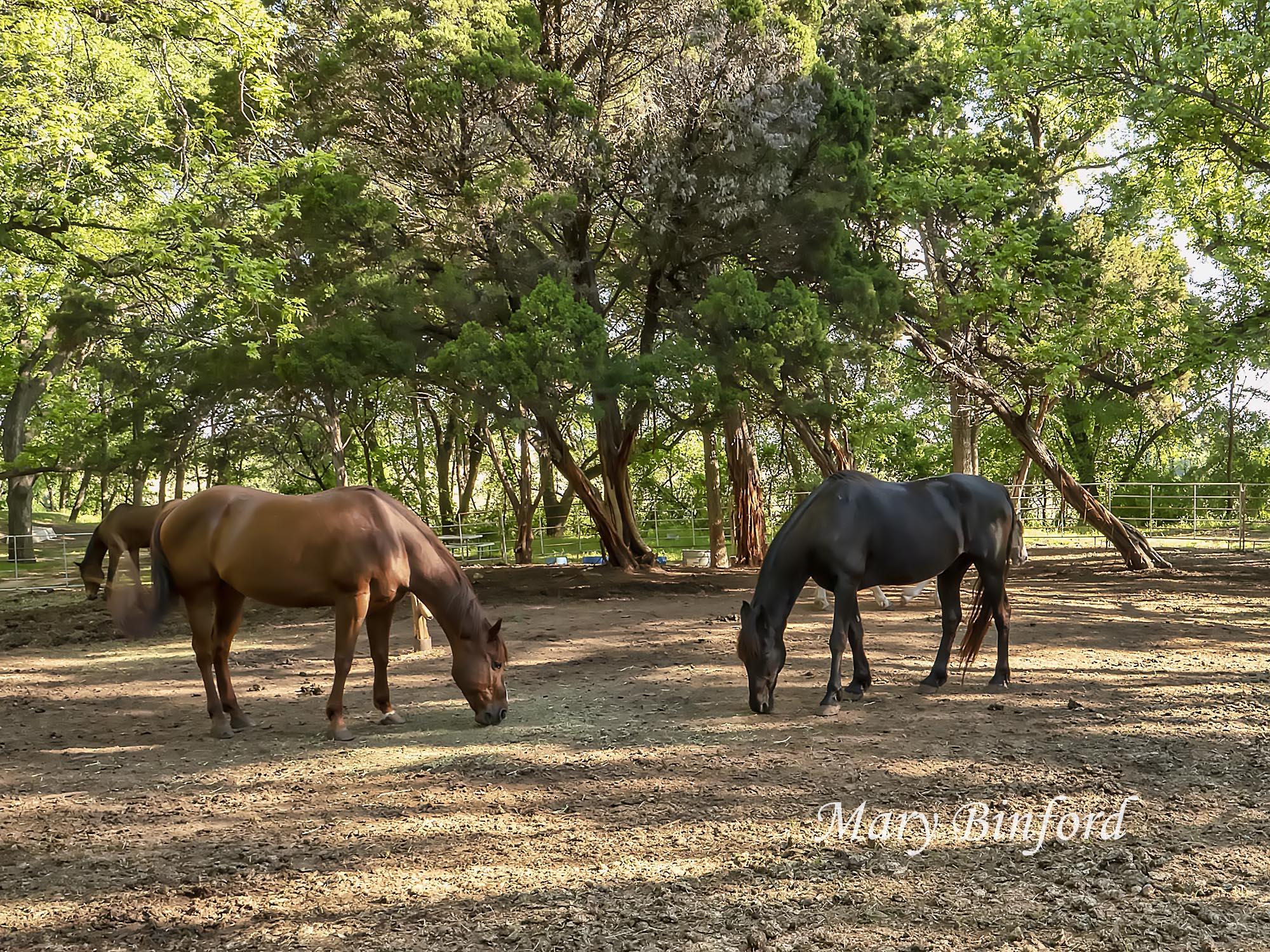 02_mb_horses.jpg