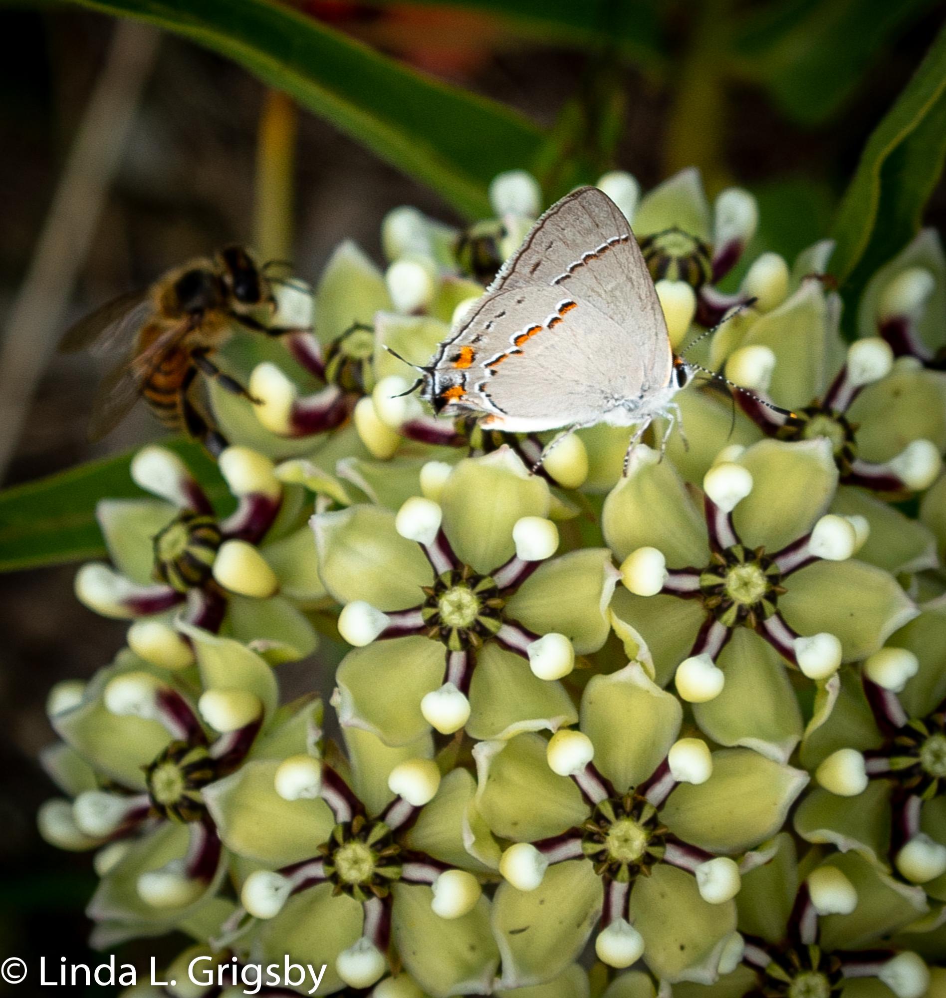 03.LLG.Butterfly.jpg