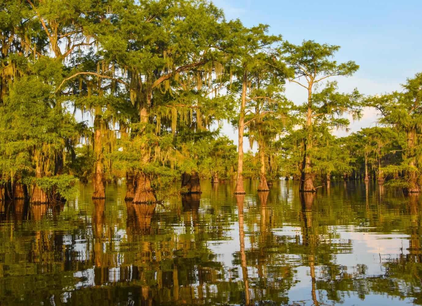 02.sjs.Caddo Lake.jpg.jpg