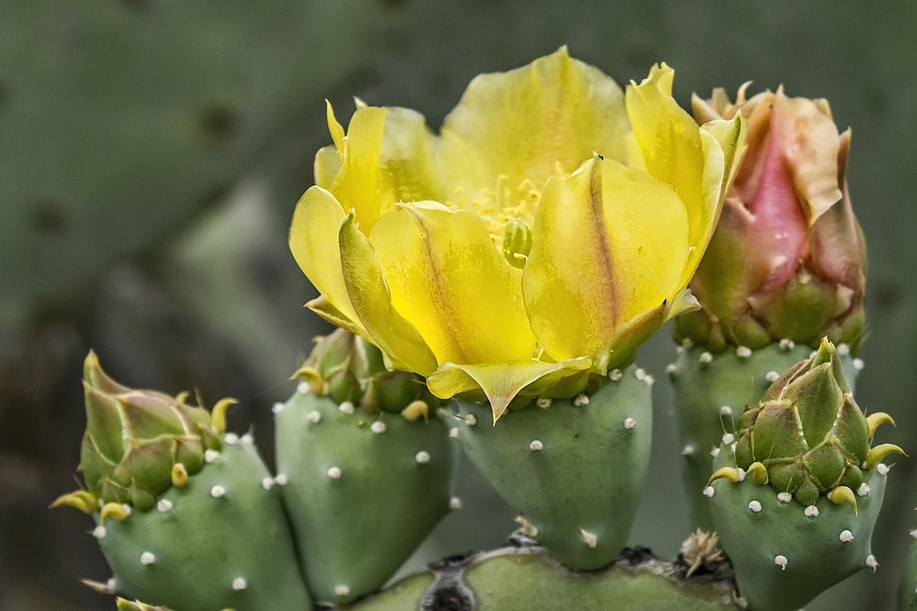 CactusFlower - MaryBinford.jpg