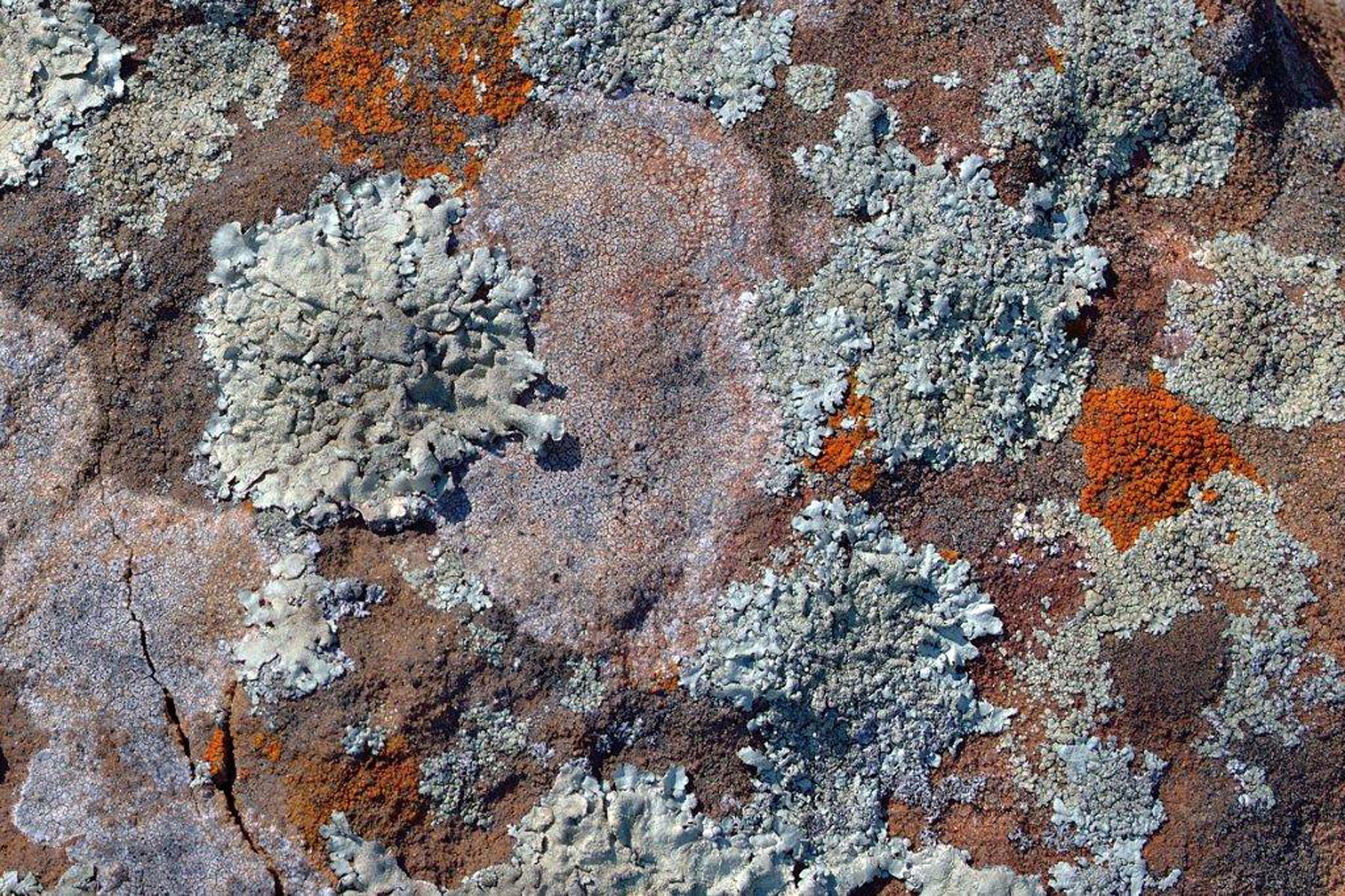 LichenOnRock - ElinorHite.jpg