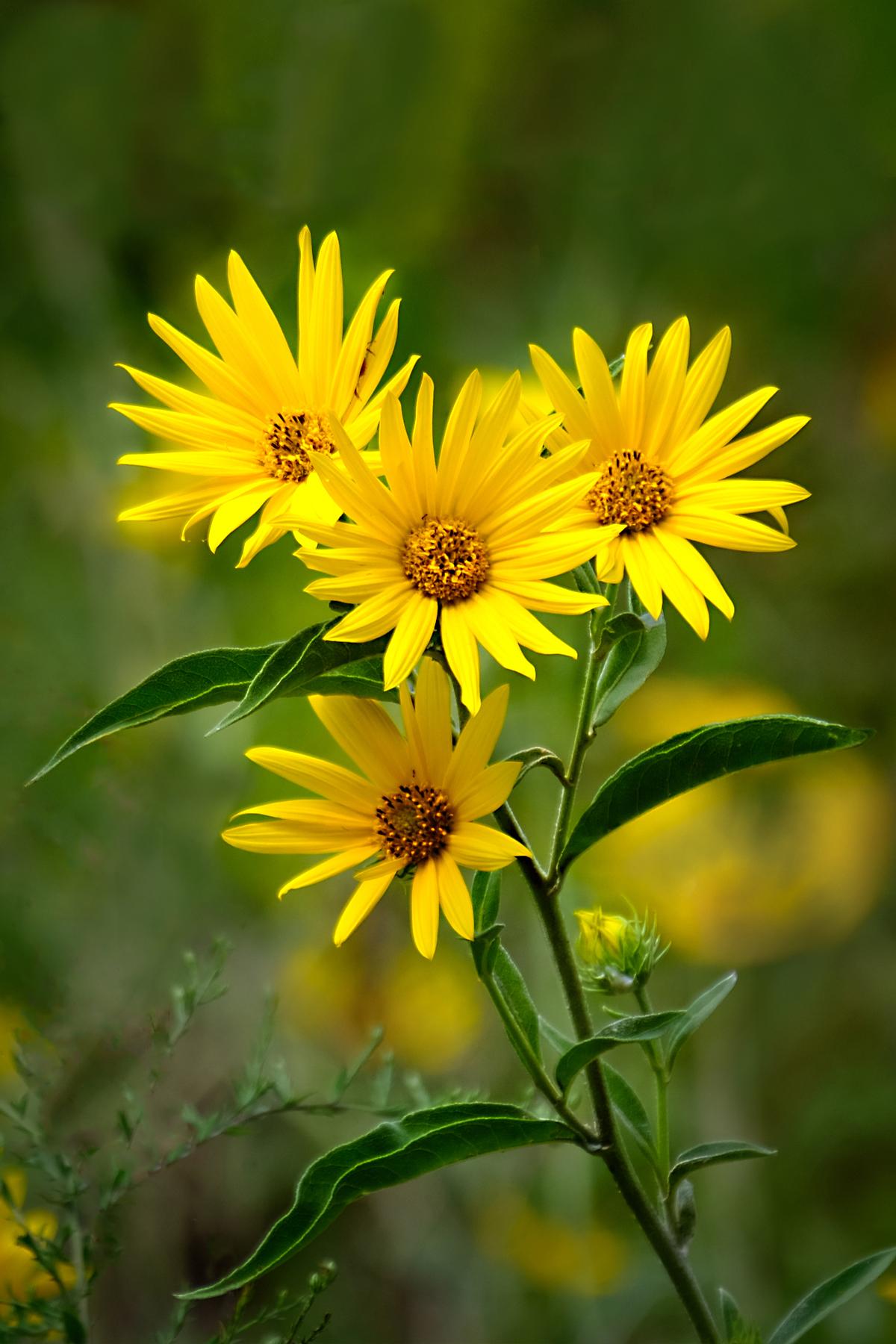 SunshineOnWildflowers - DeniseRemfert.jpg