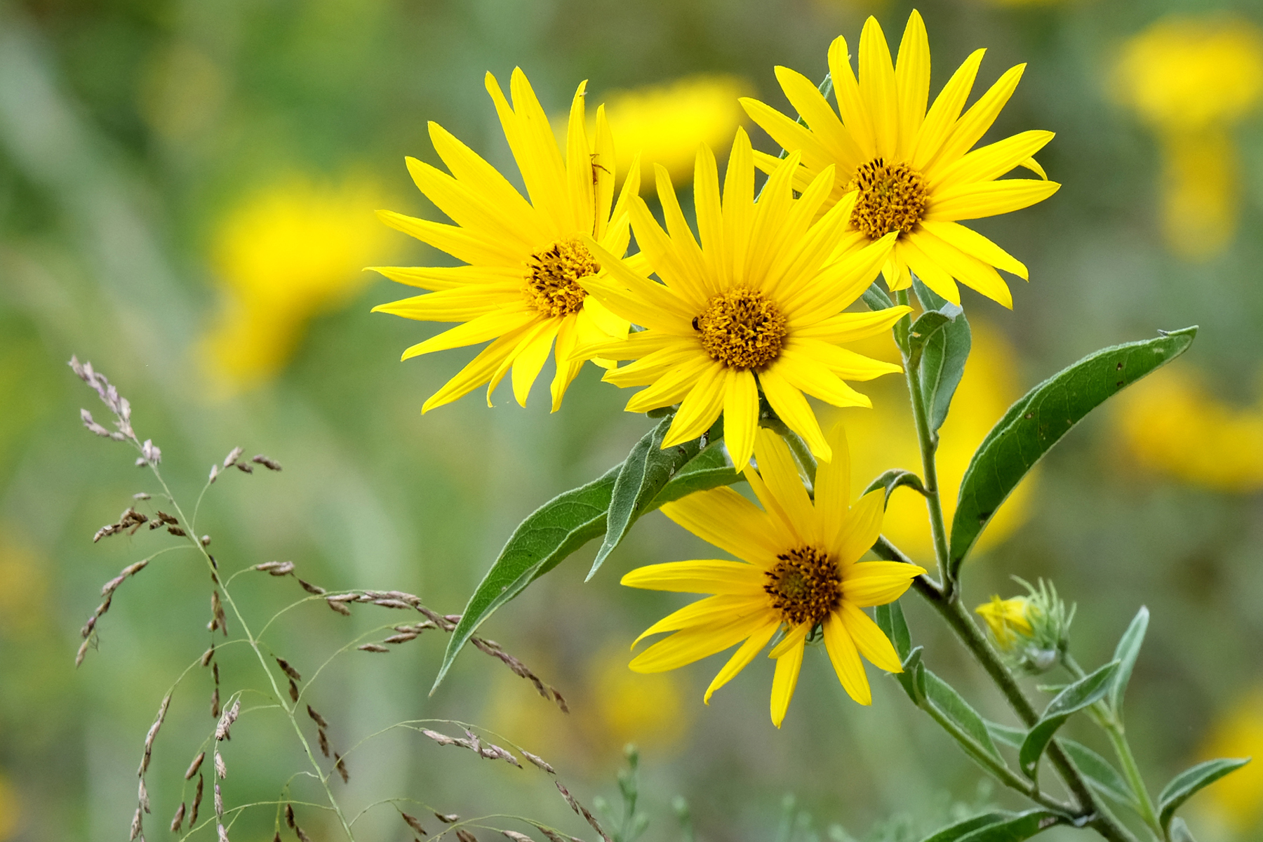 Wildflowers - PeggyEvans.jpg