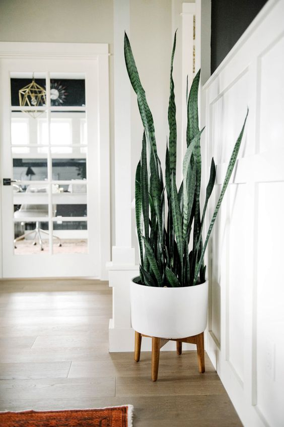 Snake Plant - Also known as the Mother-in-Law's Tongue (oof), the Snake Plant is a pretty popular houseplant and is the best kind for those who forget plants need love. It thrives in a pot and rarely needs sunlight or any attention at all. Place it in the bedroom —possibly in a cute plant stand like this one—since it does an excellent job at releasing oxygen at night.    Photo by Suburban Bees