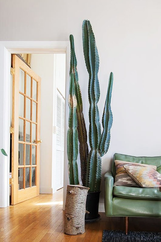 Giant cactus in the living room, yes. - Live in the desert and still can't get enough of cacti! Placing an oversized potted cactus in the living room is the perfect way to bring a little bit of what we love about the outside, inside. Photo by: SF Girl by Bay