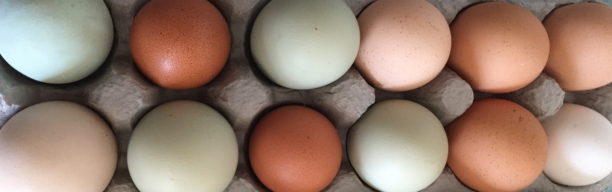 Lucky Leaf Farm - Winter 2018 Egg CSA Aggreement