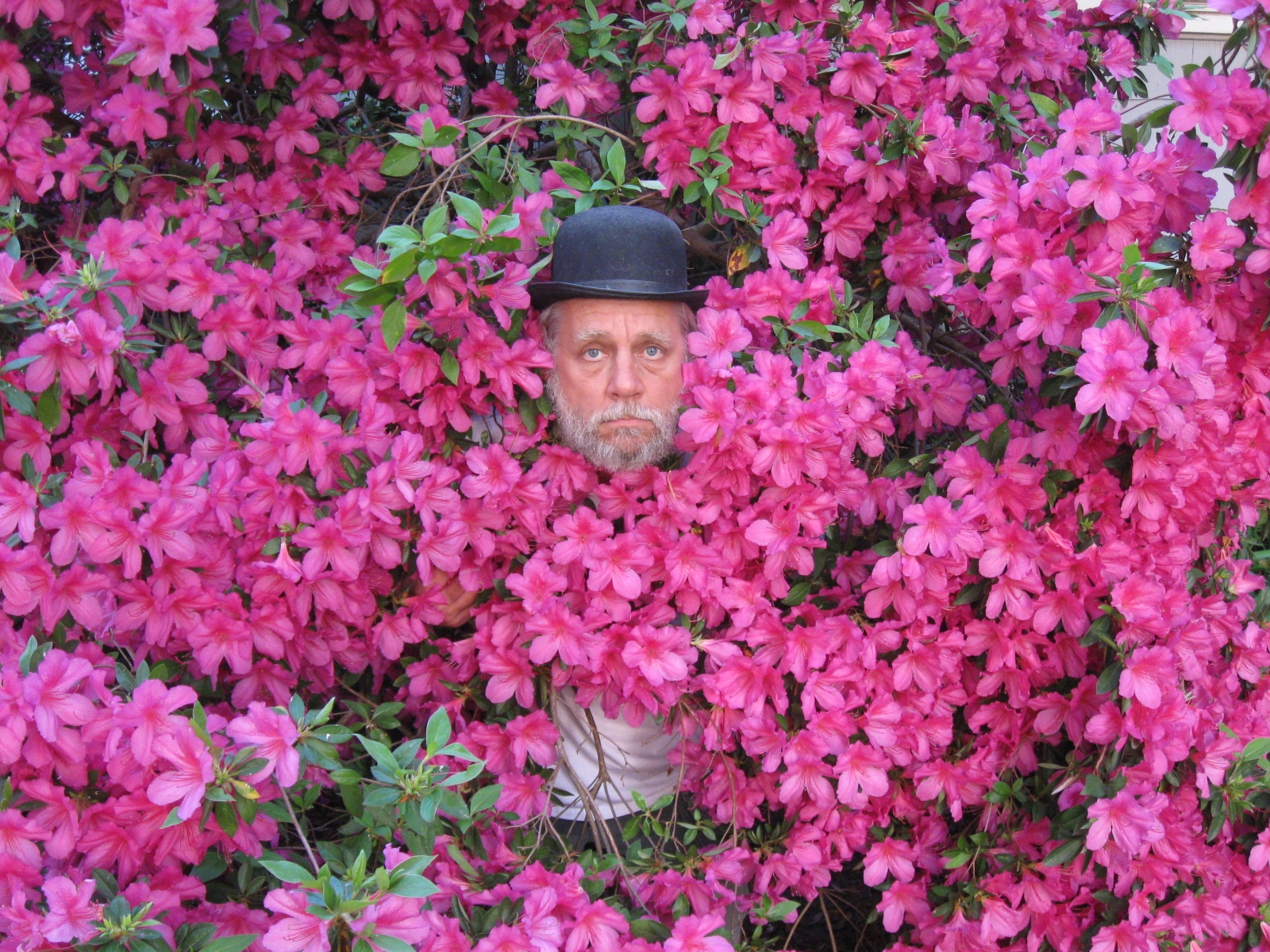 Head in flowers 2.jpg