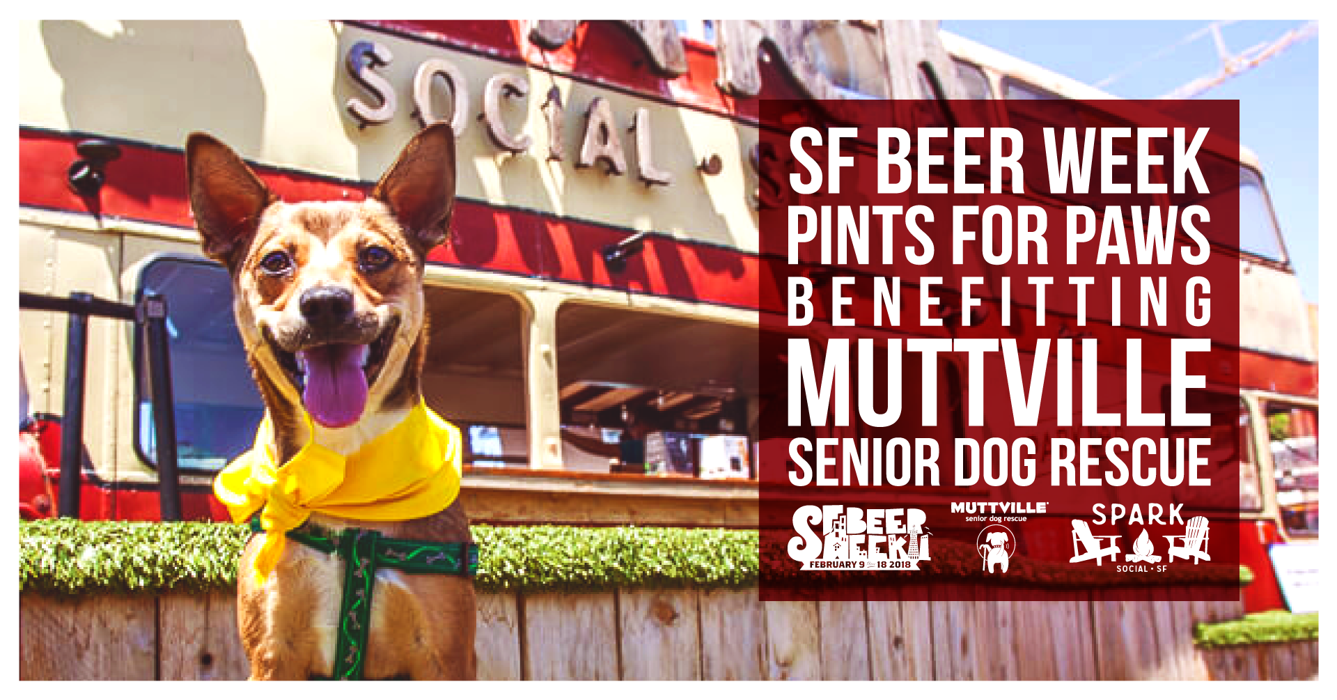 final-pintsforpaws-facebookevent-highres-web-a.png