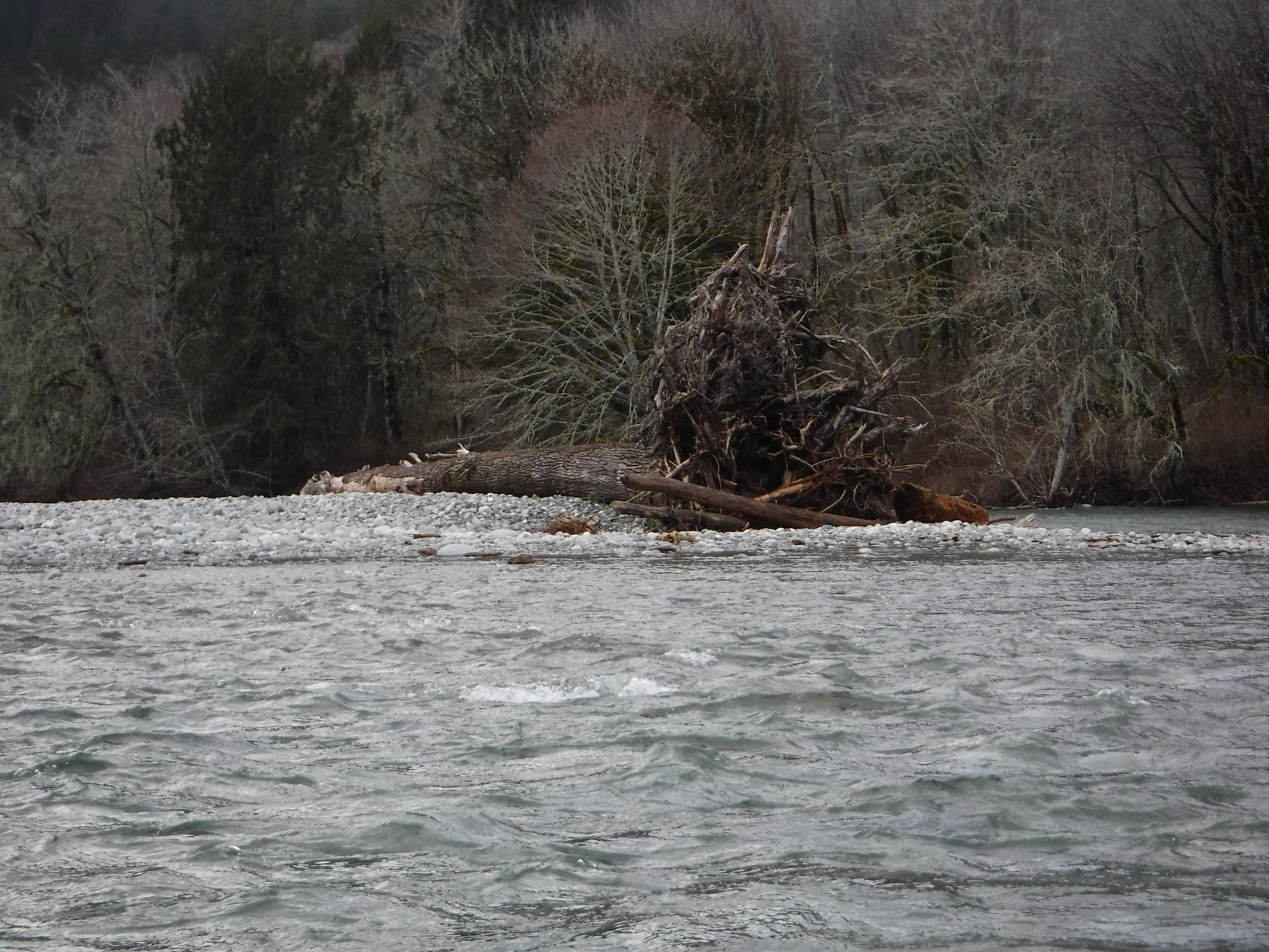 Large tree washed down river.