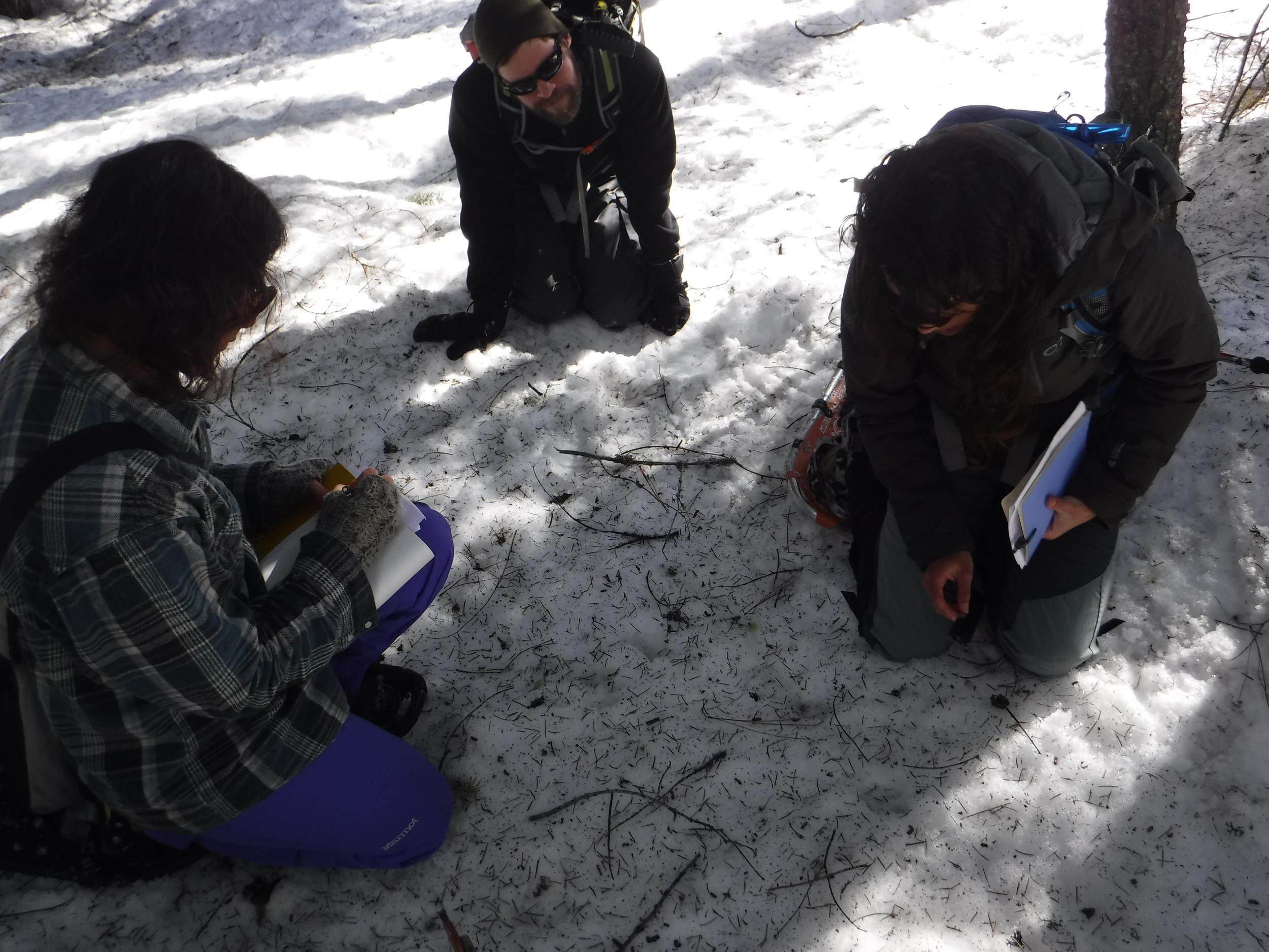 Sasha, Adam and Ginna identifying tracks.