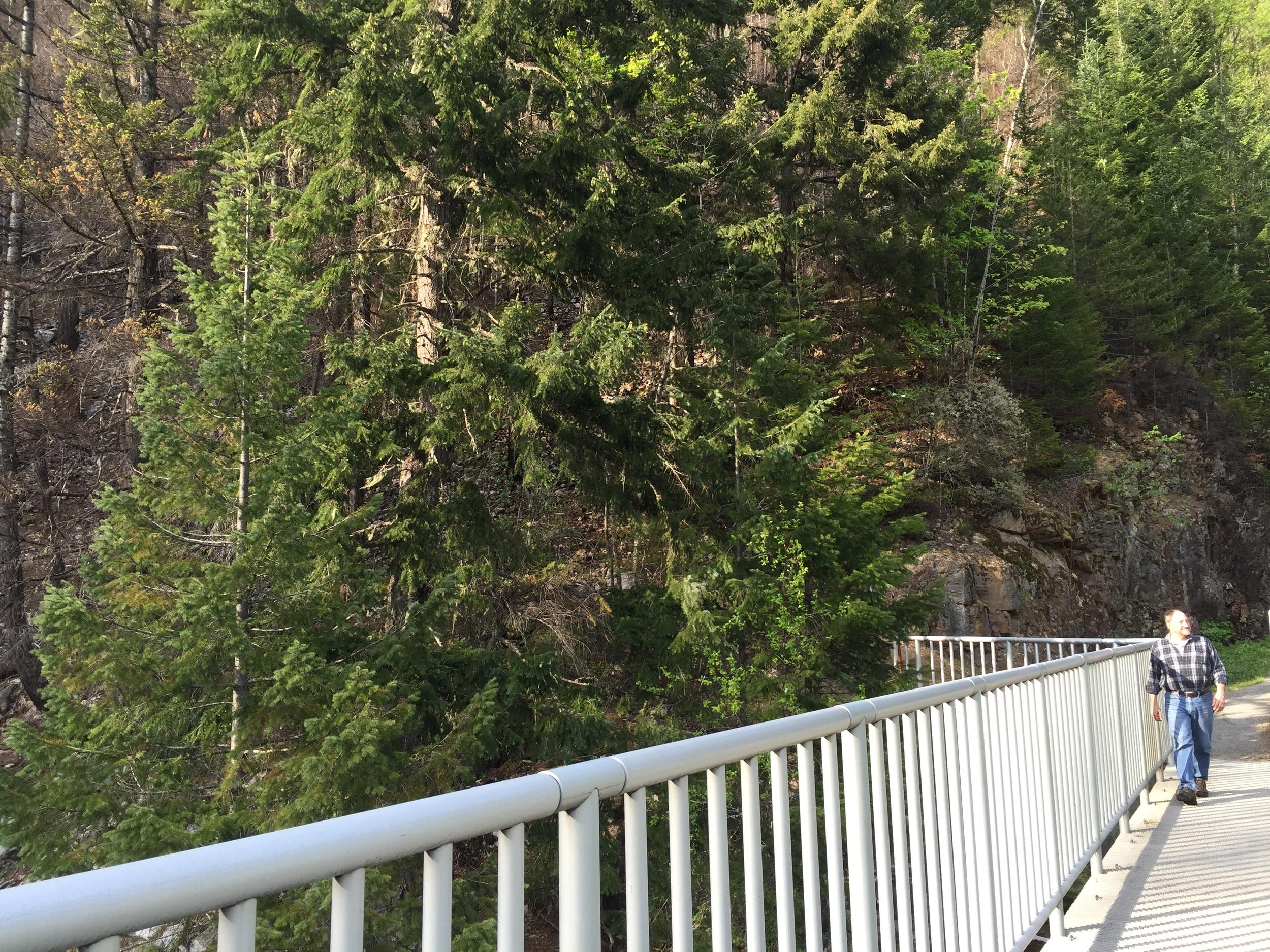 Dad enjoying the view at Gorge Creek Falls.