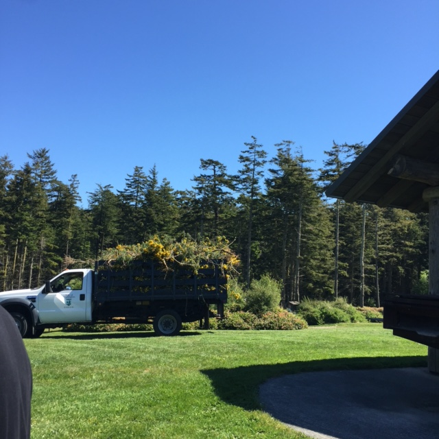 One of the three truckloads full of scotch broom! Photo courtesy of Kati Ortiz.