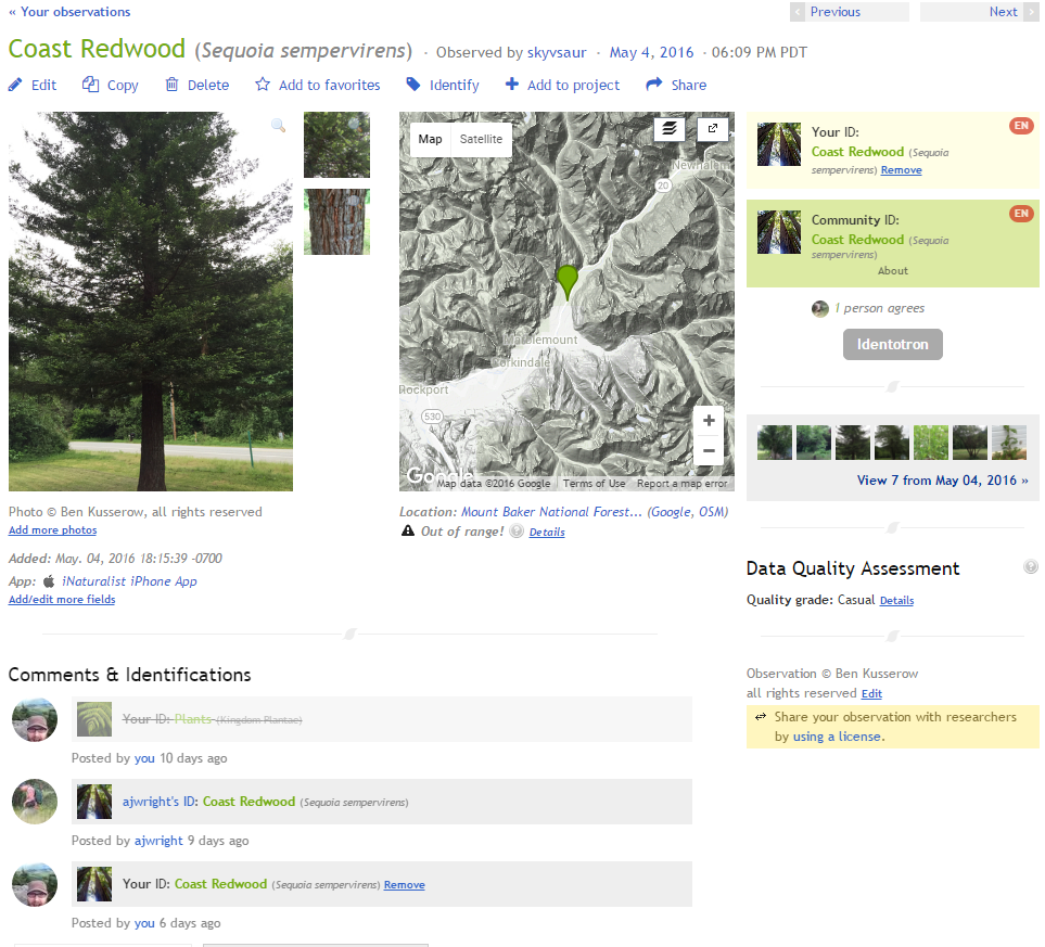 ID page for my Coastal Redwood. Thanks ajwright!