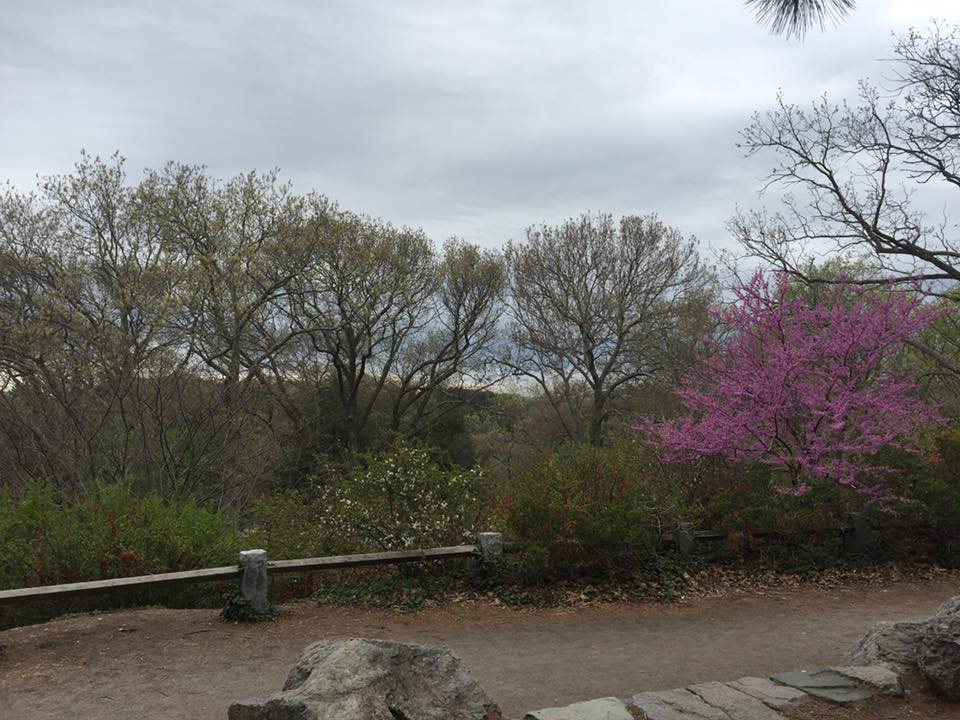 Over looking the Arnold Arboretum