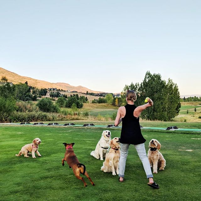 #5dogs #shilohlepup