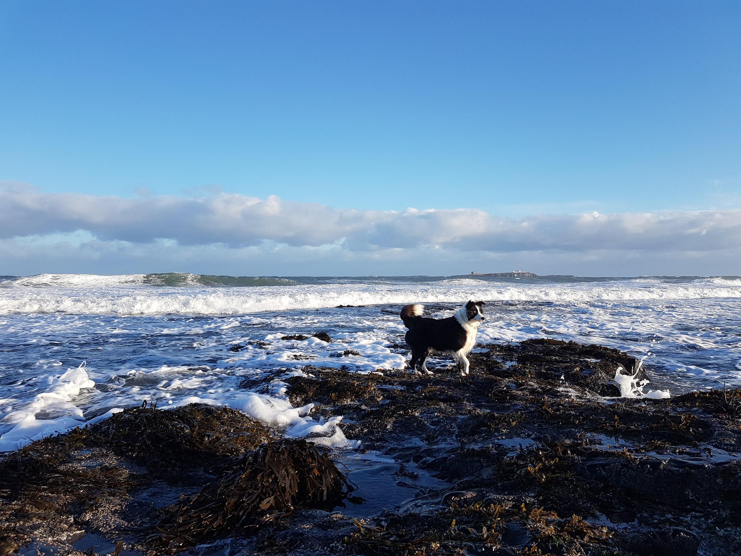 Gatbsy overlooking the Farne Islands