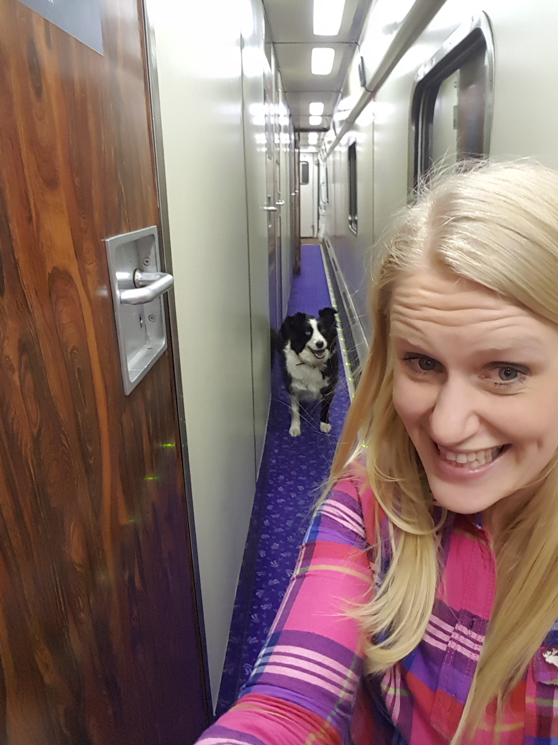 Dogs are allowed on the Overnight Sleeper to Scotland.