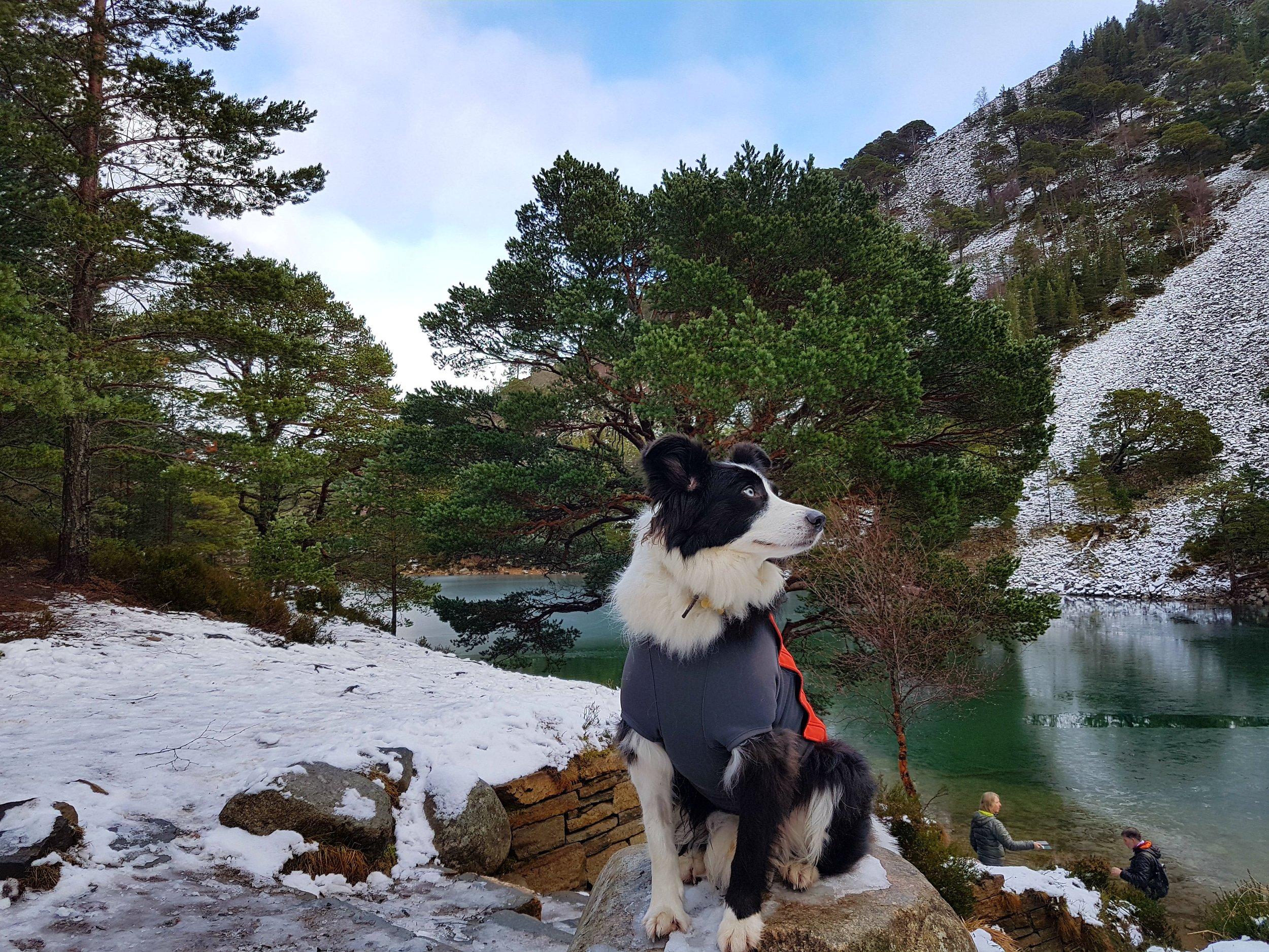 Green Loch Glenmore Forest.jpg