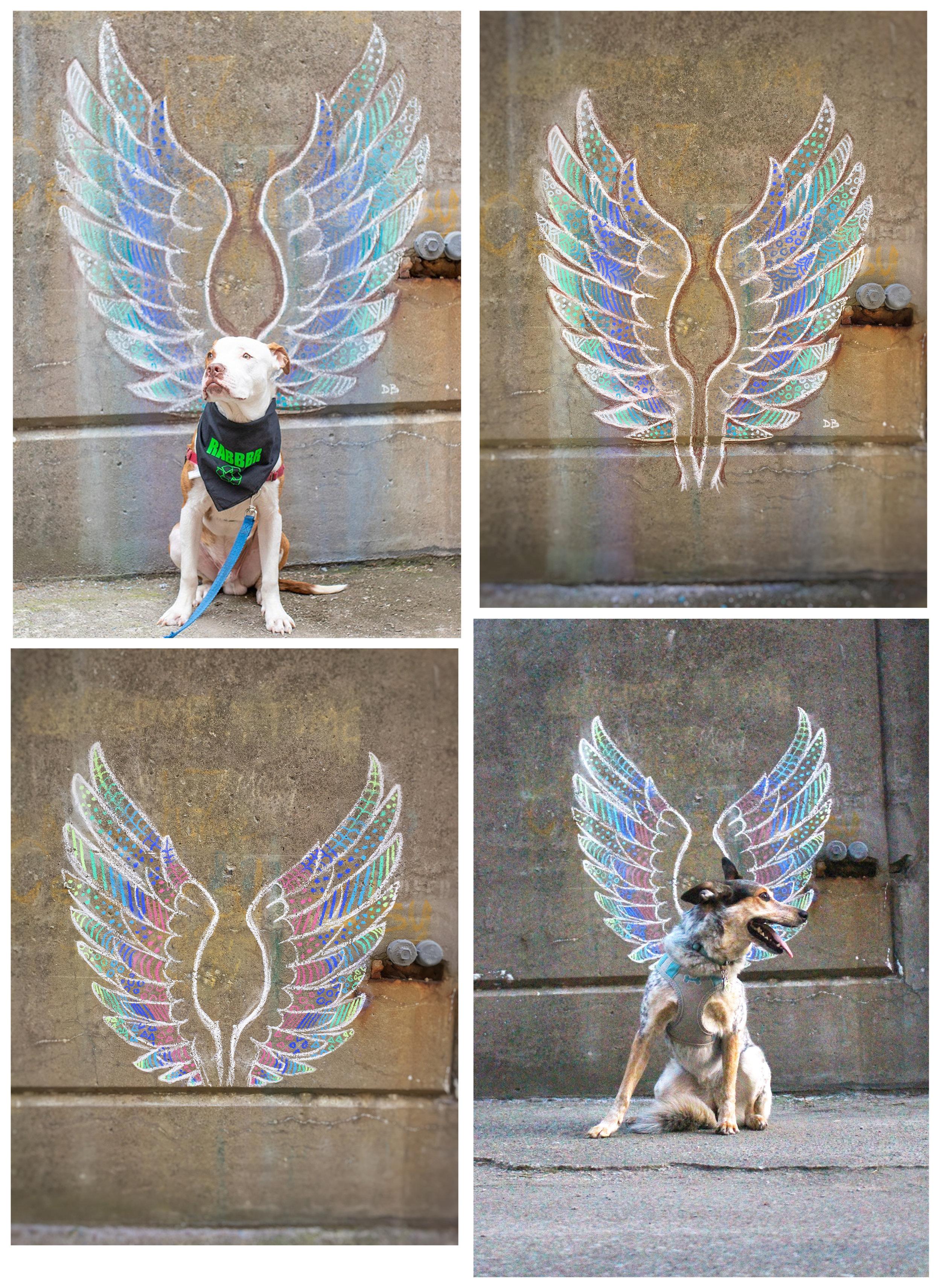 Dog Wings Chalkbomb