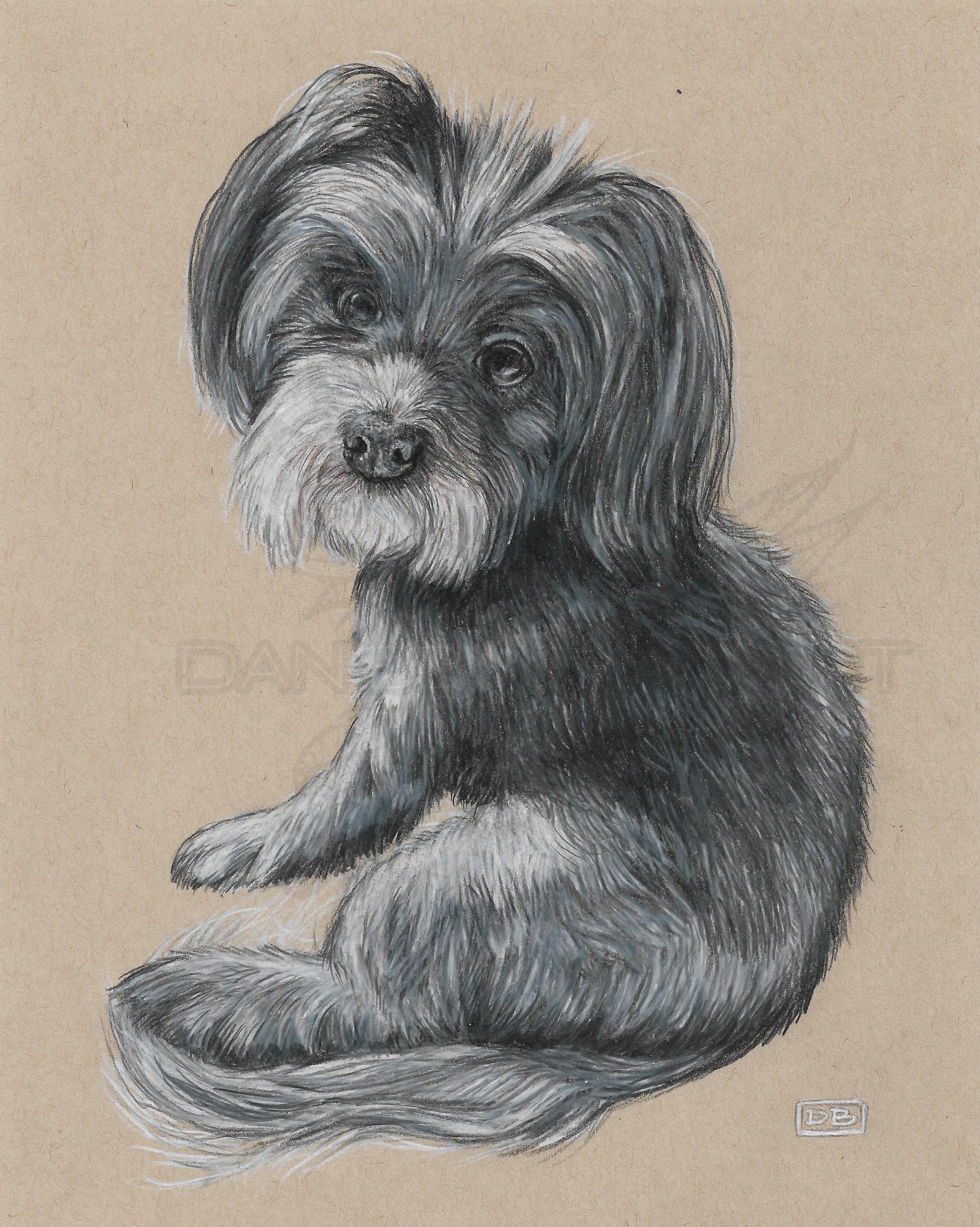 Willow Dog Portrait Commission